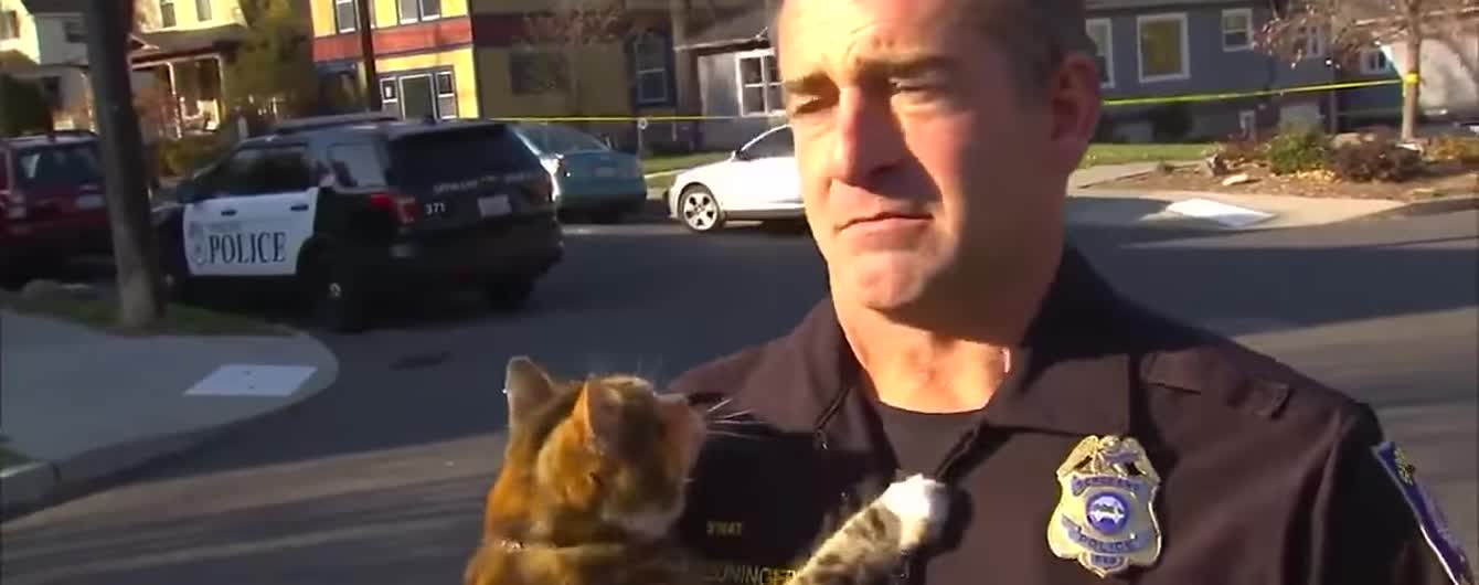 Мережу смішить кіт, який напав на серйозного копа під час інтерв'ю