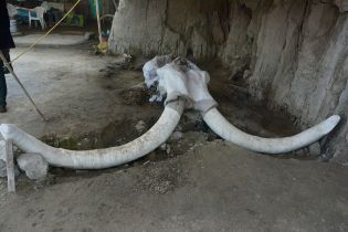 В Мексике нашли огромные ловушки на мамонтов: это меняет представление об охоте древних людей