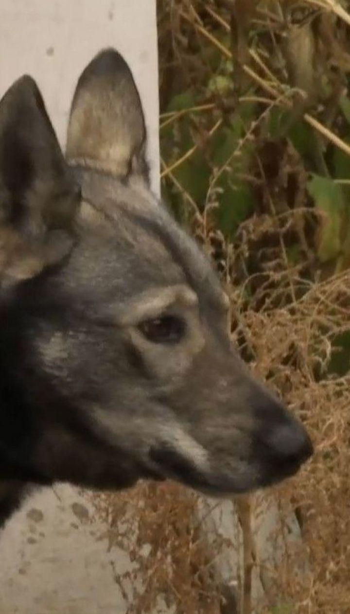 Літня жінка померла на Харківщині від укусів домашнього пса її сестри