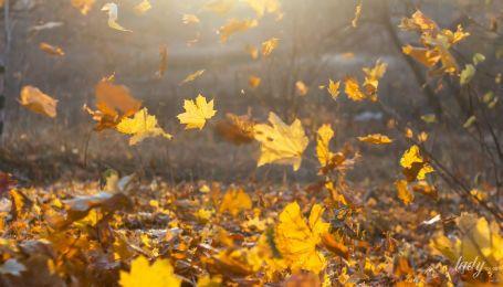 День, коли у світі панує гармонія: гороскоп на 11 листопада
