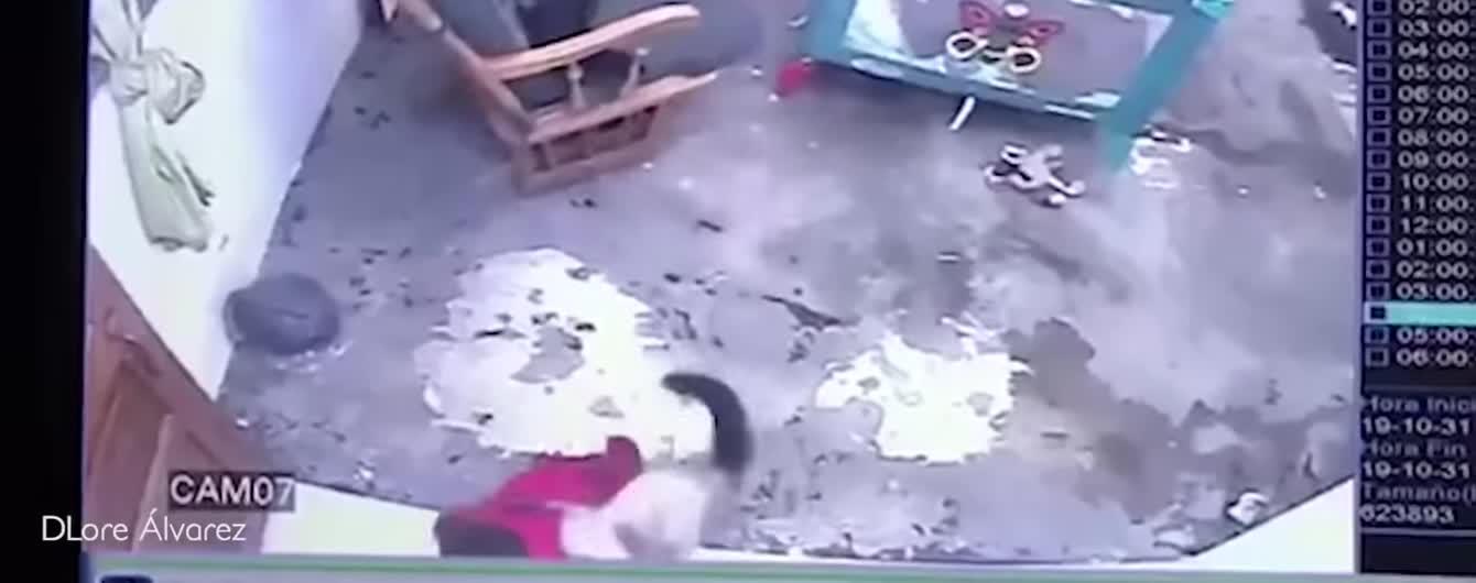 У Колумбії кішка врятувала однорічного малюка від смерті