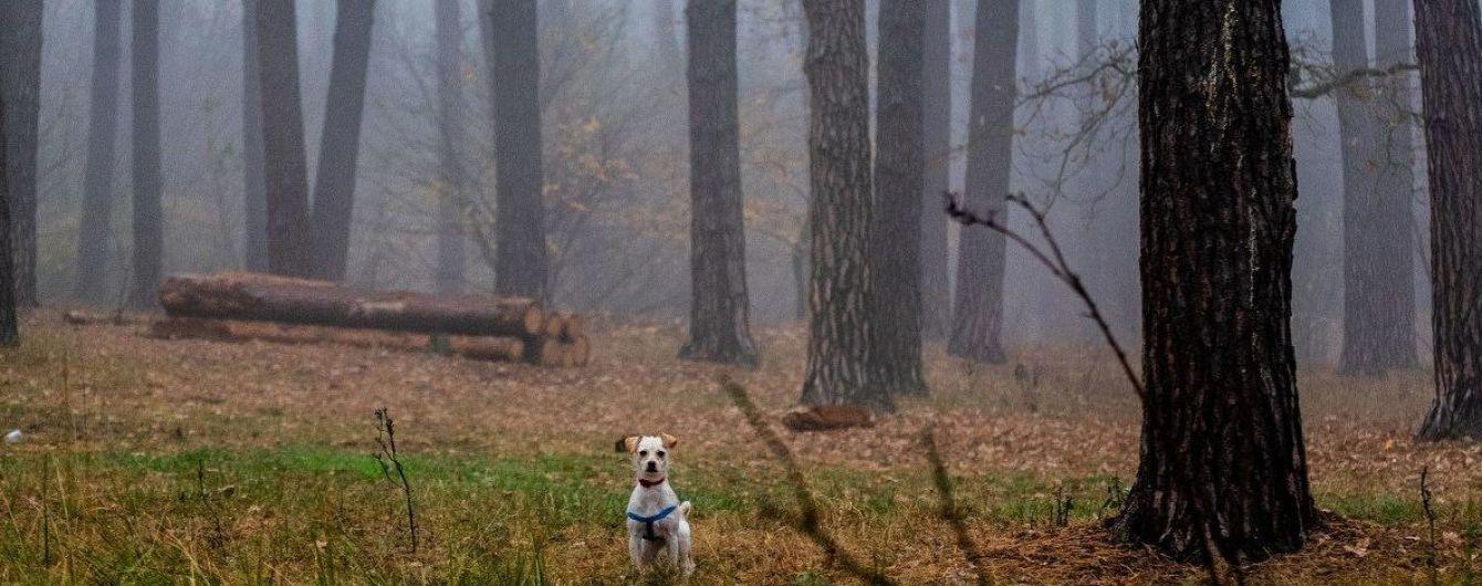 Рекордне тепло, небезпечний туман та дощі: погода на вихідні