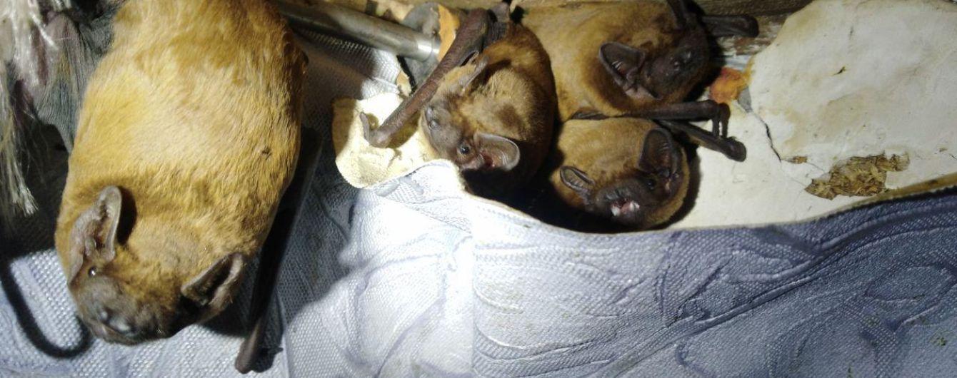 На балконе киевлян поселились 120 летучих мышей