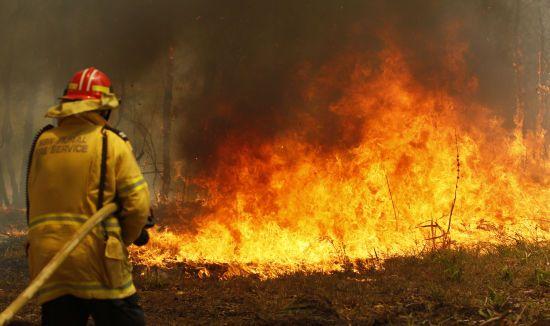 Катастрофічні пожежі в Австралії вбили трьох людей та 350 коал