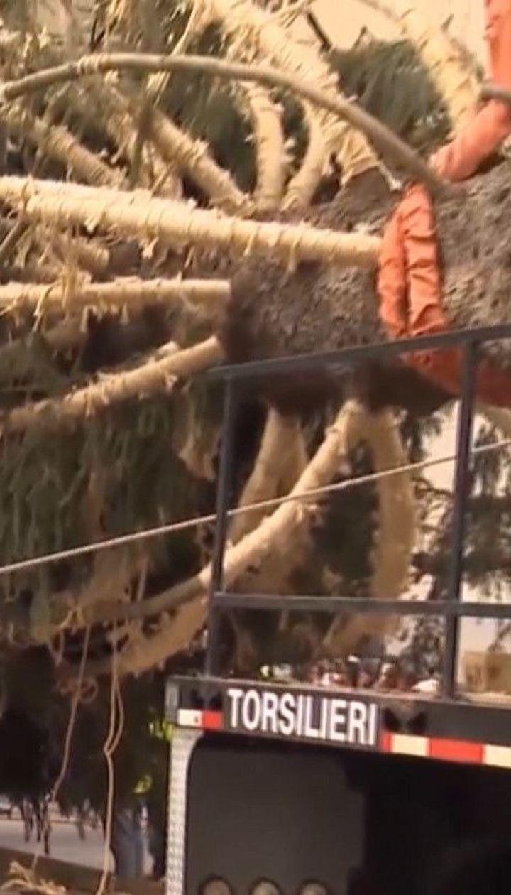 В Рокфеллеровском центре установили елку