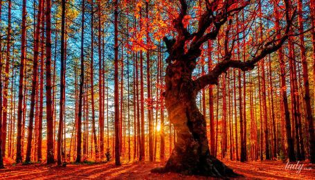 Рекомендуется праздник: гороскоп на 12 ноября