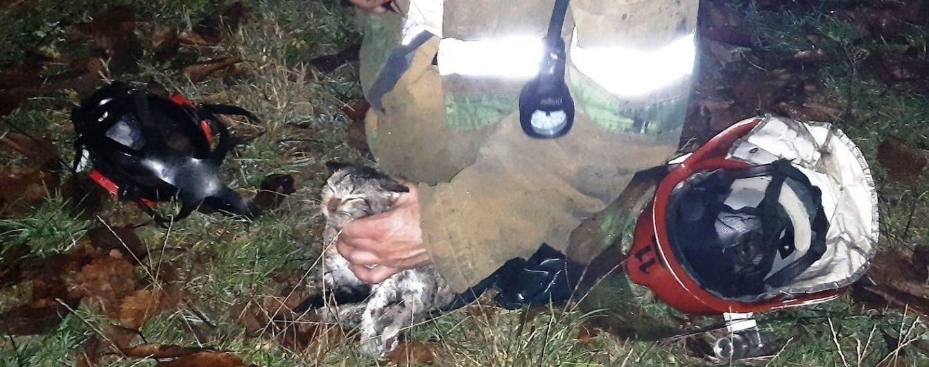 Полтавська ДСНС показала зворушливі кадри порятунку кошеняти з пожежі