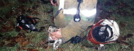 Полтавская ГСЧС показала трогательные кадры спасения котенка из пожара