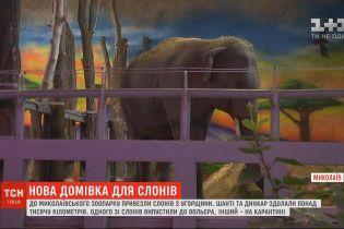 В зоопарк Николаева привезли двух слонов: животные путешествовали пять дней