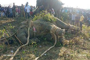 Слон, названный в честь бен Ладена, убил пятерых людей в Индии