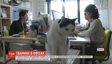 В Японии офисные сотрудники ходят на работу с домашними любимцами, чтобы преодолевать стресс