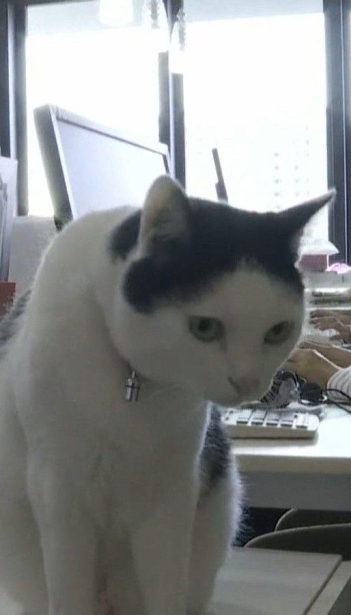 У Японії офісні працівники ходять на роботу із домашніми улюбленцями, аби долати стрес