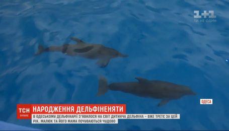 Детеныш дельфина появился на свет в дельфинарии Одессы