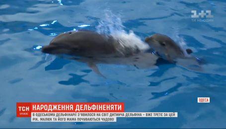 В одесском дельфинарии родился третий дельфиненок за год