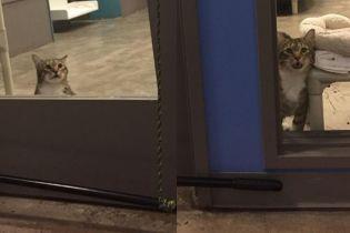 В США кота посадили в одиночную камеру, потому что выпускал на волю других