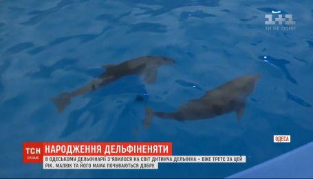Детеныш дельфина появился на свет в Одесском дельфинарии