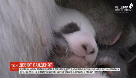 В Берлинском зоопарке впервые показали двух детенышей-близнецов панды