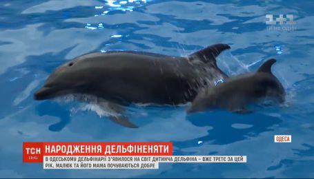 В одесском дельфинарии показали новорожденного детеныша дельфина