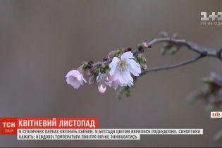 Апрельский ноябрь: в столичных парках цветут сакуры