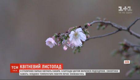 Квітневий листопад: у столичних парках цвітуть сакури