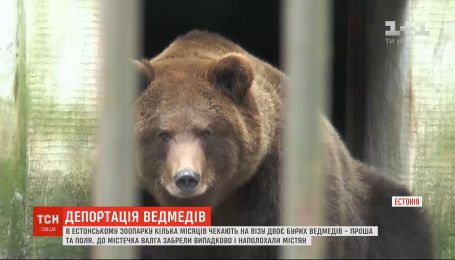 В Таллинском зоопарке двое российских медведей несколько месяцев ждут визу, чтобы вернуться домой