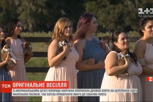 Цуценята замість квітів: у штаті Флорида наречена влаштувала незвичайне одруження