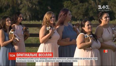 Щенки вместо цветов: в штате Флорида невеста устроила необычное бракосочетание
