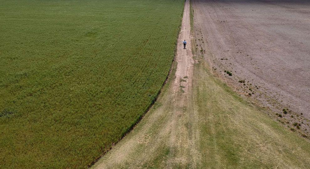 Рада запровадила в Україні вільний ринок землі: що він передбачає і як його будуть запускати