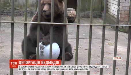 В естонському зоопарку кілька місяців чекають на візу двоє російських бурих ведмедів