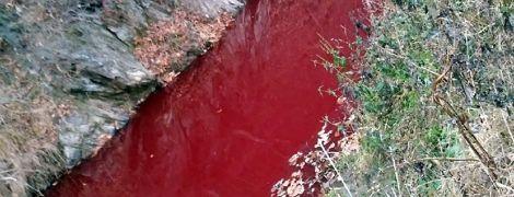 В Южной Корее из-за крови тысячи убитых свиней побагровела река