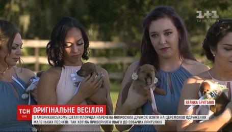 Щенки на свадьбе американки - невеста привлекла внимание к проблемам бездомных животных