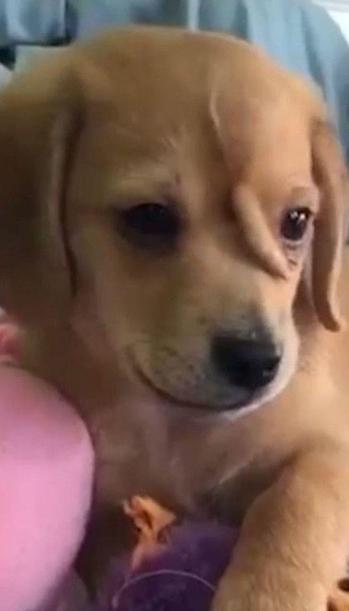 Щенок-единорог: в США спасли собаку, родившуюся с хвостом на голове
