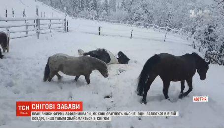 Снежные забавы: на ферме в австрийском поселке лошади радостно встретили зимнюю погоду