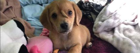 В США нашли щенка с вросшим в лоб хвостом