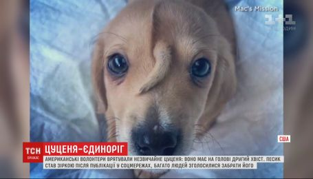 В США щенок с хвостом на голове стал звездой соцсетей
