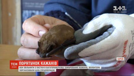 Харківські волонтери організували спецоперацію, аби звільнити з пастки кажанів