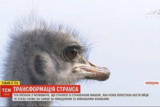 Была Маша, стала Миша: на ферме под Киевом страусиха перестала нести яйца