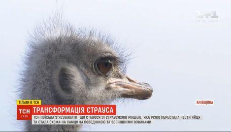 Была Маша, а стала Миша: на ферме под Киевом страусиха перестала нести яйца