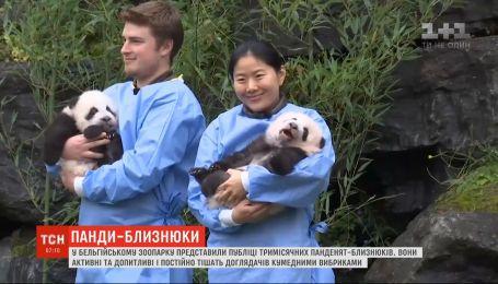 В зверинце Бельгии торжественно показали публике близнецов панды