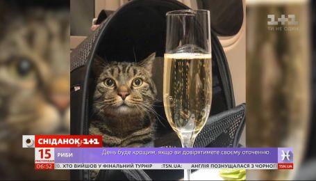 Мужчина провез толстого кота по кличке Виктор в салоне самолета
