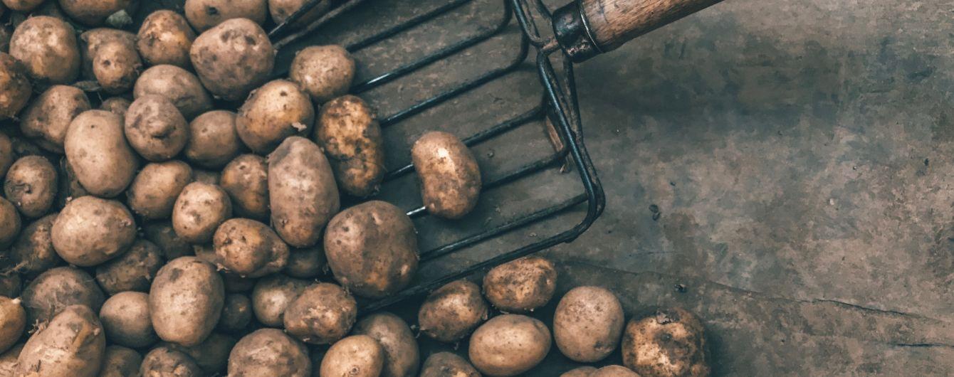 За рік найбільше здорожчала картопля та здешевшала цибуля