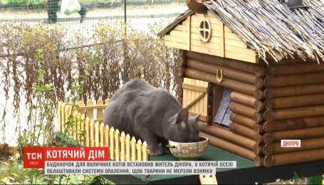 Із обігрівом і декором: будиночок для котів змайстрували у Дніпрі