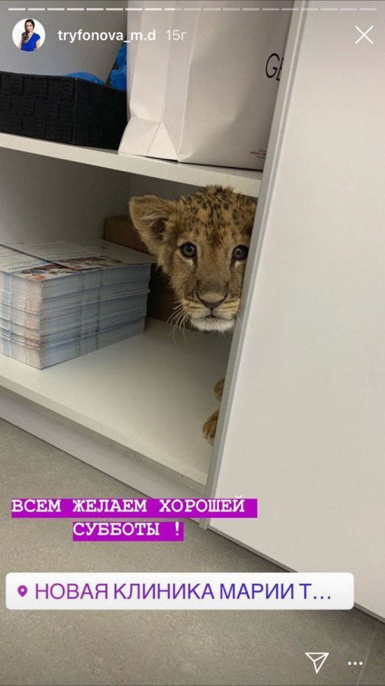 У Києві косметологічна клініка використала справжнє левеня заради розваги, зоозахисники обурені