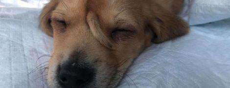 """Хвостик на лбу обожаемого в Сети щенка-""""единорога"""" может быть его паразитическим близнецом"""