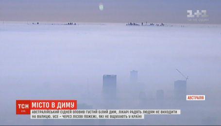 Сидней в дыму: австралийский город накрыл густой занавес