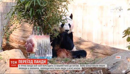 Пишні проводи для Бей-Бея: панда переїздить із Вашингтона до Китаю
