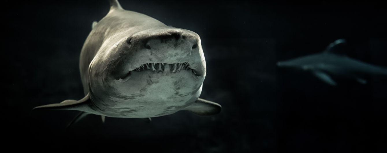 Учені розробили гідрокостюм, який захищає від акулячих зубів