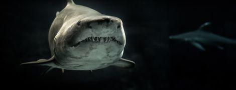 Ученые придумали гидрокостюм, который защищает от акульих зубов