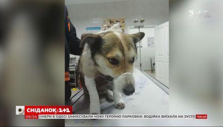 Привязал собаку к авто и уехал: украинцев поразила жестокость чиновника из Хмельницкого