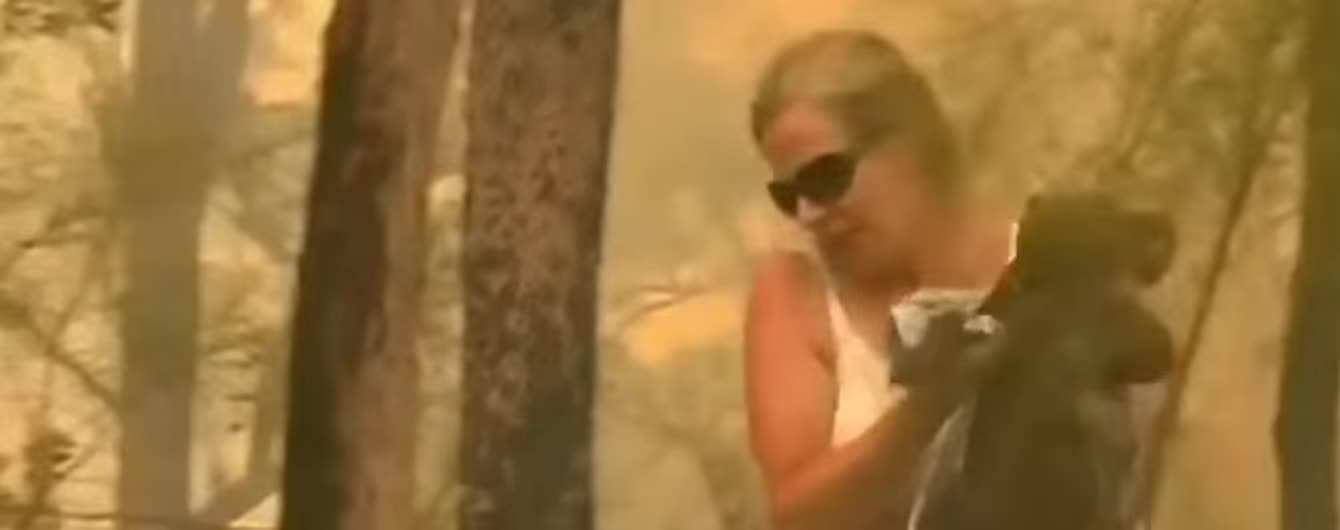 Врятована з лісової пожежі в Австралії коала Л'юїс померла